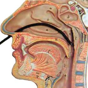 Гастроскопия желудка: суть метода обследования, преимущества и отзывы