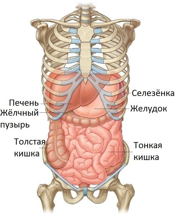 Гепатомегалия печени: симптомы и лучшие методы лечения