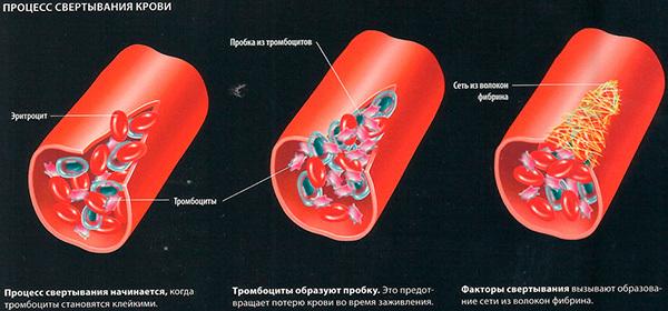 Назначение и расшифровка анализа крови на свертывание