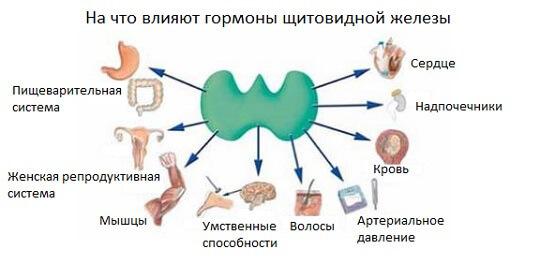 Анализ на ТТГ: за что отвечает гормон, норма и отклонения от нее, методика лечения