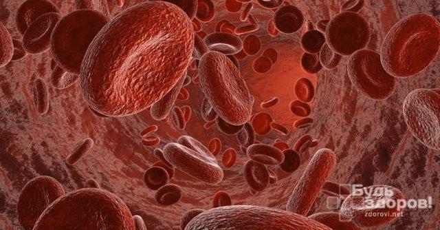 Общий анализ крови развернутый: назначение и расшифровка