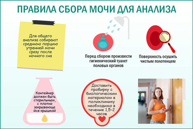 Красная моча: причины изменения цвета мочи у детей, взрослых и беременных
