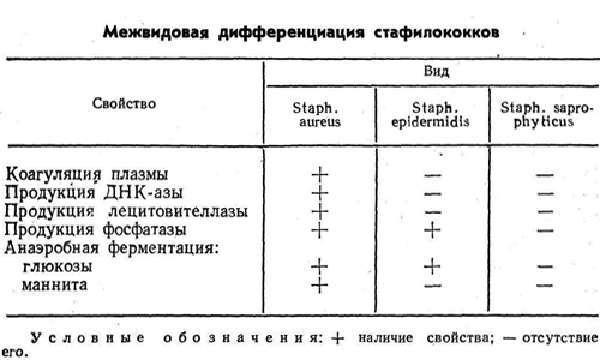 Признаки стафилококка, стадии, терапия и опасность инфекции