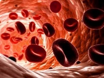 Повышены эритроциты в крови, что это значи? Причины и опасность эритроцитоза