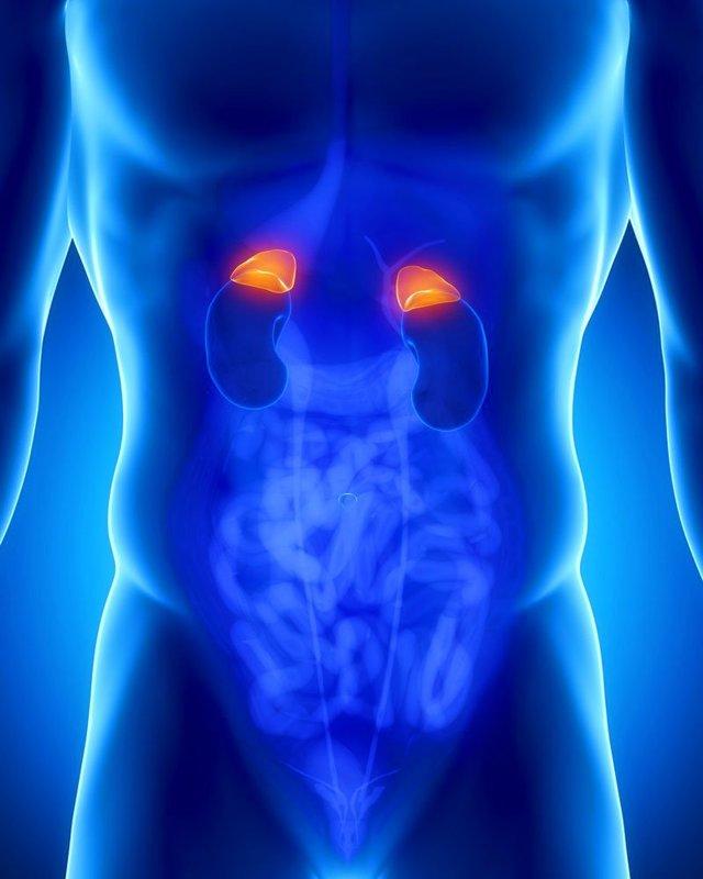 Анализы на гормоны надпочечников, норма и причины отклонения