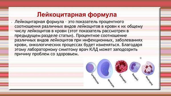 Лейкоцитарная формула крови: значение, норма и отклонение показателей
