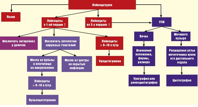 Повышенные лейкоциты в моче у беременных: причины, терапия и опасность лейкоцитурии