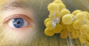 Причины, симптомы, диагностика и терапия золотистого стафилококка у взрослых