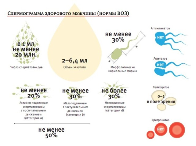 Повышенная вязкость спермы: причины, терапия, последствия
