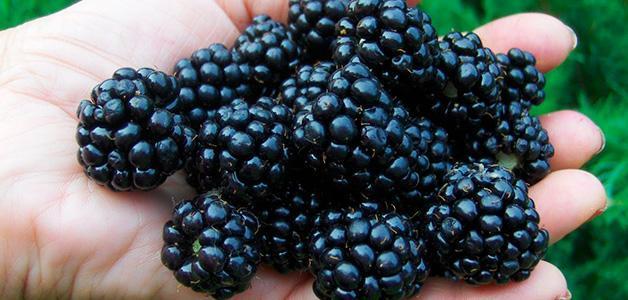 Почему бывает черный кал: физиологические и патологические причины