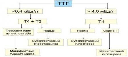 Как снизить ТТГ и причины повышения уровня тиреотропного гормона