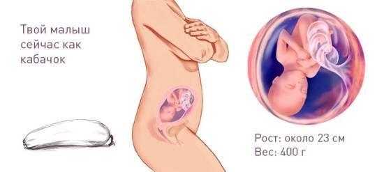УЗИ на 23 недели беременности: развитие и вес плода