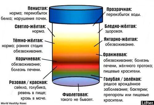 Соли в анализе мочи повышены: почему и что делать?