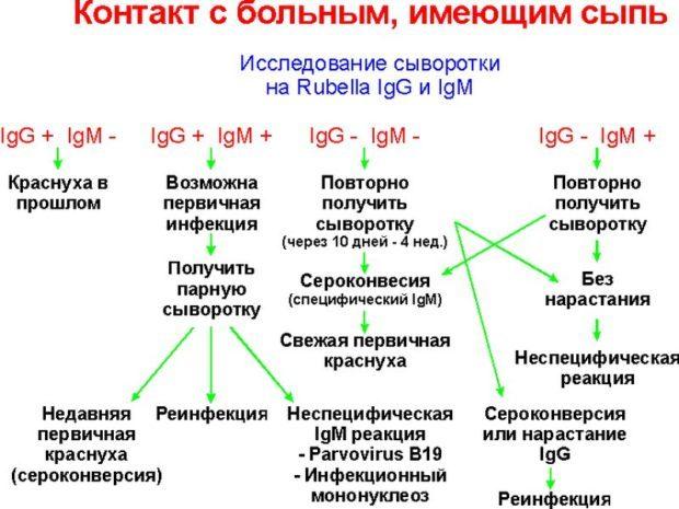 Анализы на краснуху: виды и их расшифровка