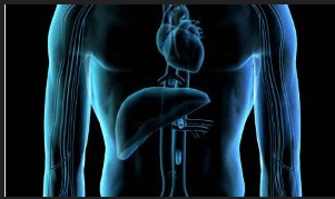 Первичный (врожденный) гемохроматоз - что нужно знать родителям