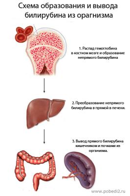 Повышенный билирубин в крови: причины и возможные заболевания