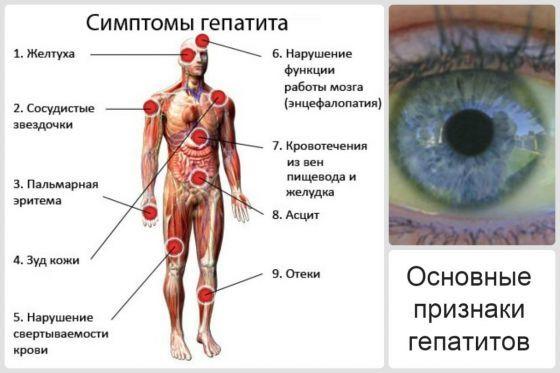 Темно-зеленый цвет кала: причины и возможные заболевания