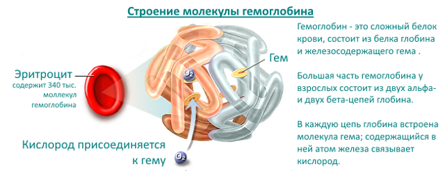 Среднее содержание гемоглобина в крови: диагностика, норма по возрасту и причины отклонения