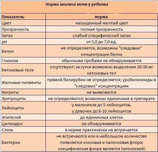 Анализ мочи бактериологический: показания к проведению и оценка результатов