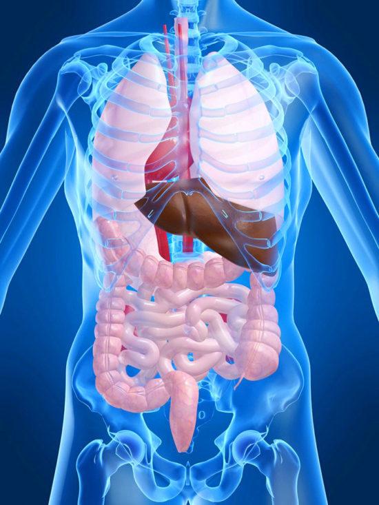 МСКТ брюшной полости с контрастированием: показания, результаты