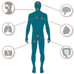 Гистамин - что это такое и каково его значение для организма?