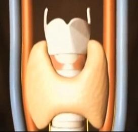 Причины увеличения щитовидки, признаки, лечение и правильное питание при патологии